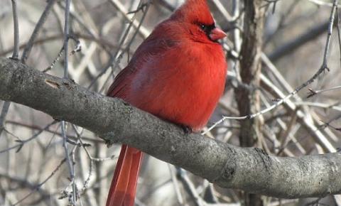 Toronto recebe certificação Bird-Friendly City da Nature Canada