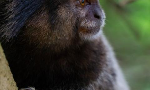 Desmatamento na floresta amazônica brasileira aumenta pelo 4º mês consecutivo