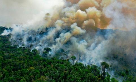 Mais de 10.000 espécies da floresta amazônica estão em risco de extinção, alerta um relatório histórico