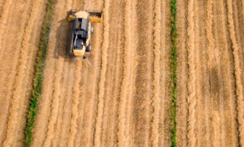 Agricultores de Saskatchewan estão estressados com a baixa produtividade das safras após semanas de seca